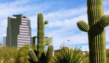 cactus in arizona landscape