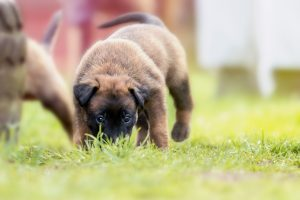 how to prepare your dog for a move in Tucson Arizona.