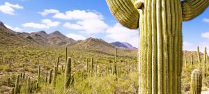 cacti and mountains in arizona landscape