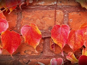 Image of bricks and autumn leaves representing why you should move in the fall
