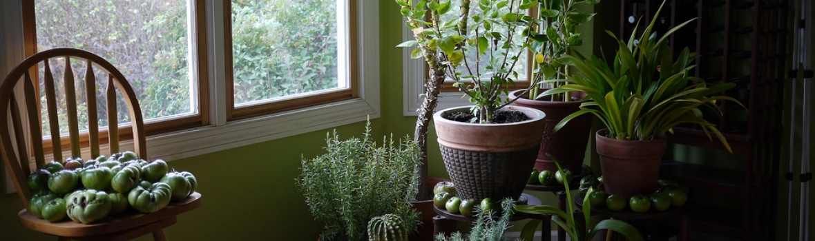 How Do I Pack My Plants for a Move?