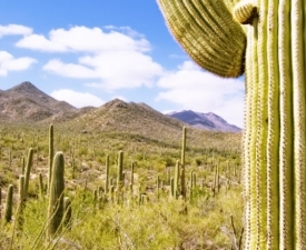 7 Spring Activities in Tucson