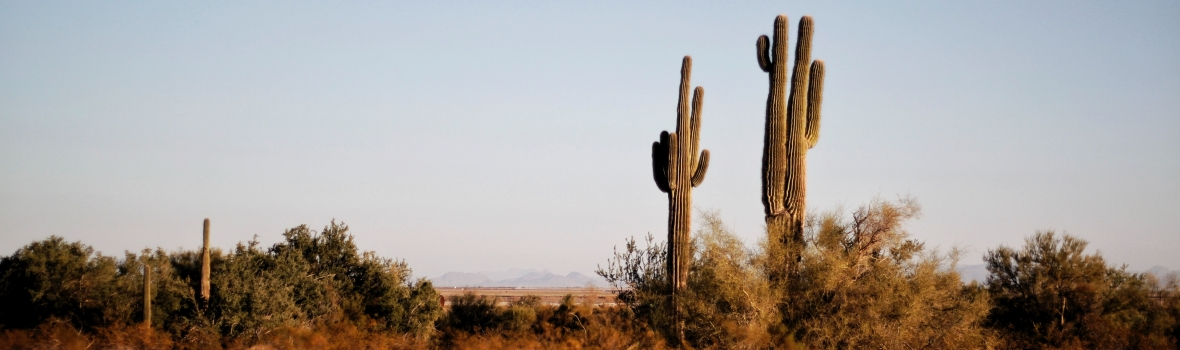 Preventing heat stroke when moving during a Tucson summer